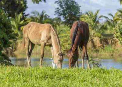 belize horses michael santos