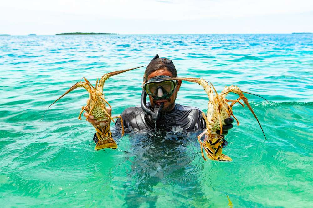 Island_belize lobster michael santos