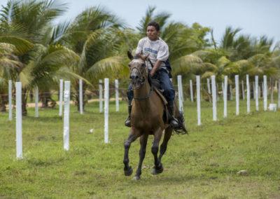 Equestrian_Horses MICHAEL SANTOS