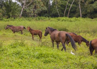 Equestrian_HorsesJungle MICHAEL SANTOS
